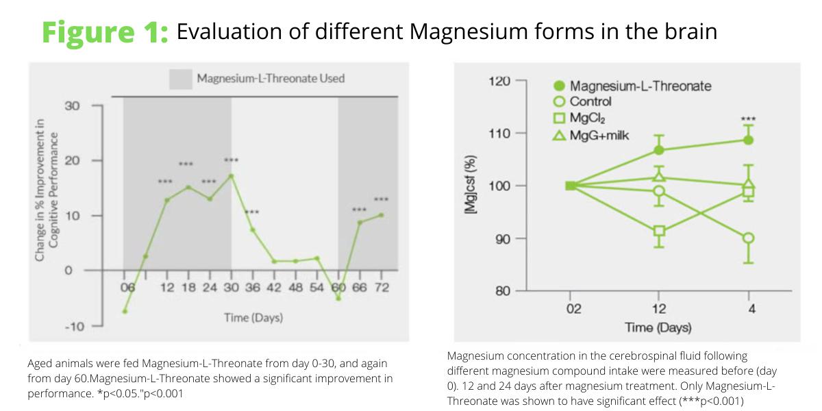 evaluation of magnesium forms in brain